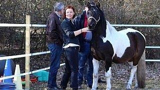 Train the Trainer - Ausbildung für pferdegestütztes Coaching