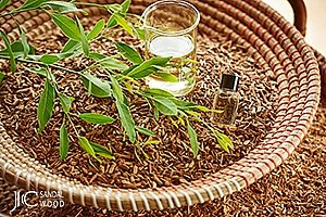 Sandelholz: Investment in einen kostbaren Rohstoff