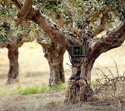 Die Kraft der Olivenbäume nutzen - mit Thomas Lommel und OLIVEDA